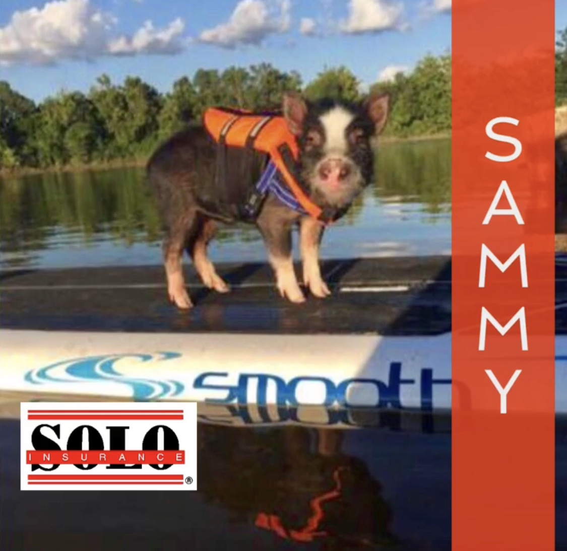 Miniature pig on a kayak in life preserver