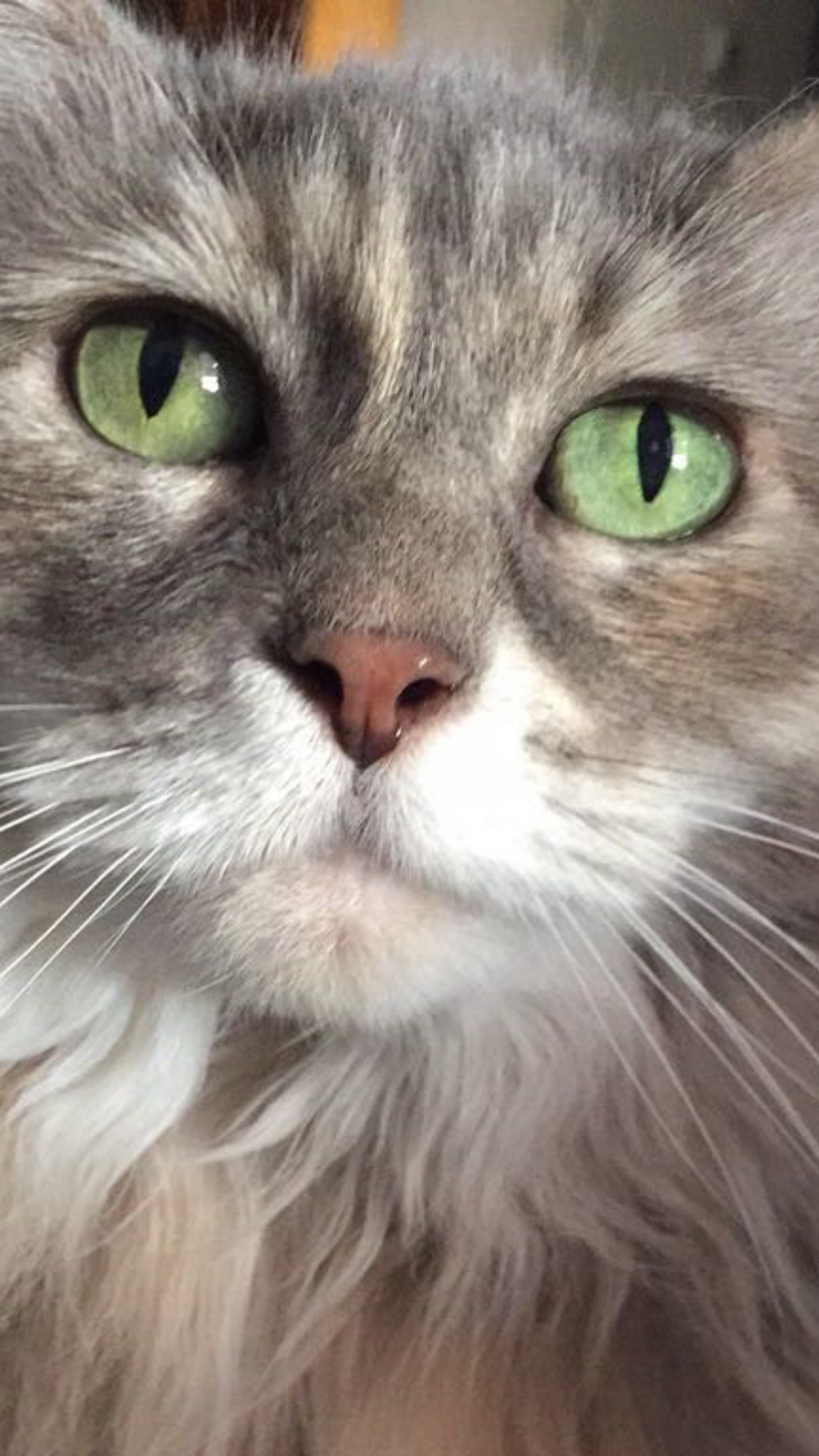Pretty grey kitty with very green eyes