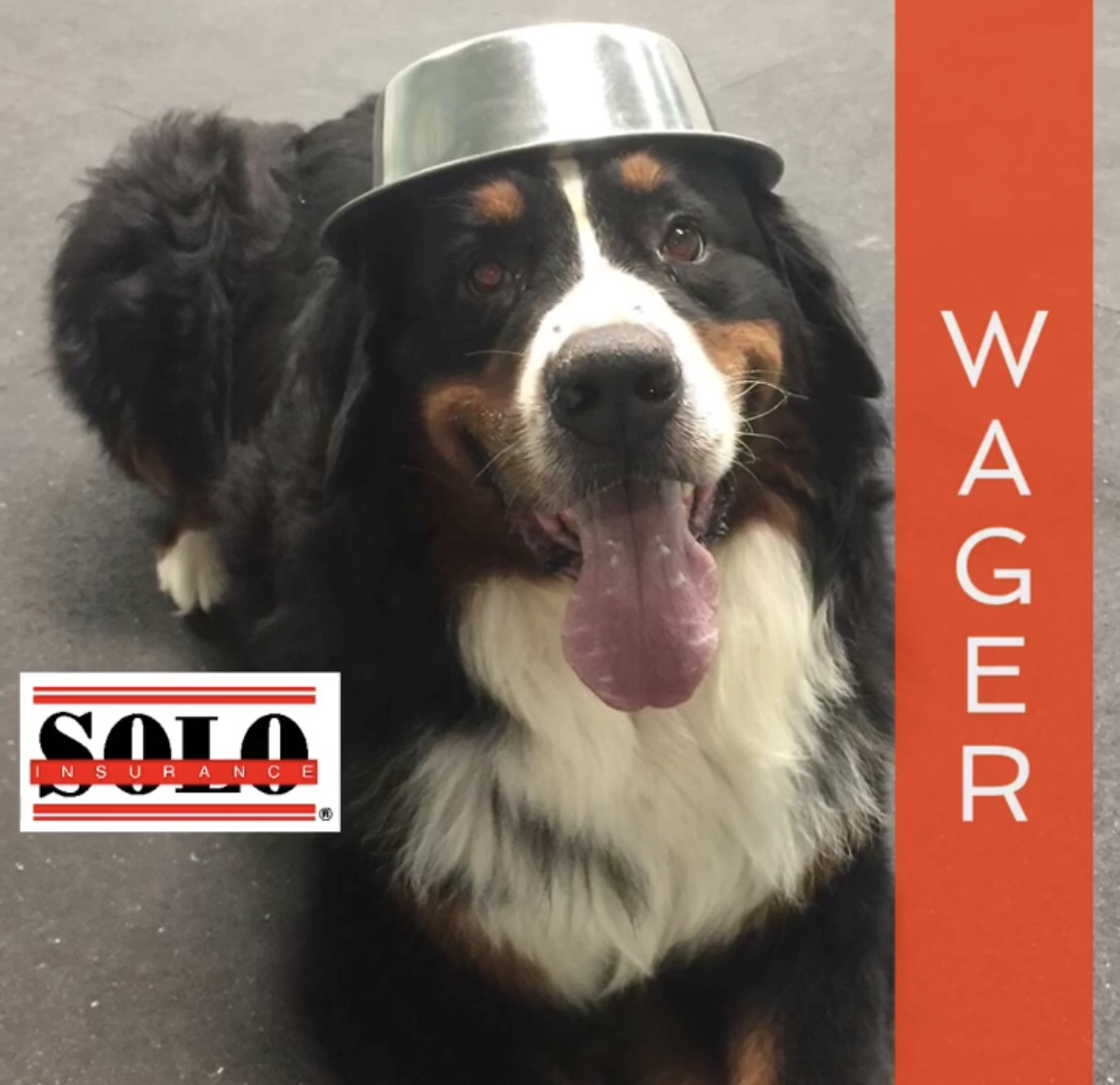 Bernese Mountain Dog wearing his dinner bowl as a hat